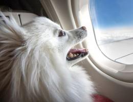 Du lịch cùng vật nuôi trên chuyến bay của All Nippon Airways