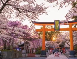 Gợi ý 7 địa điểm ngắm hoa anh đào đẹp nhất ở thành phố Kyoto